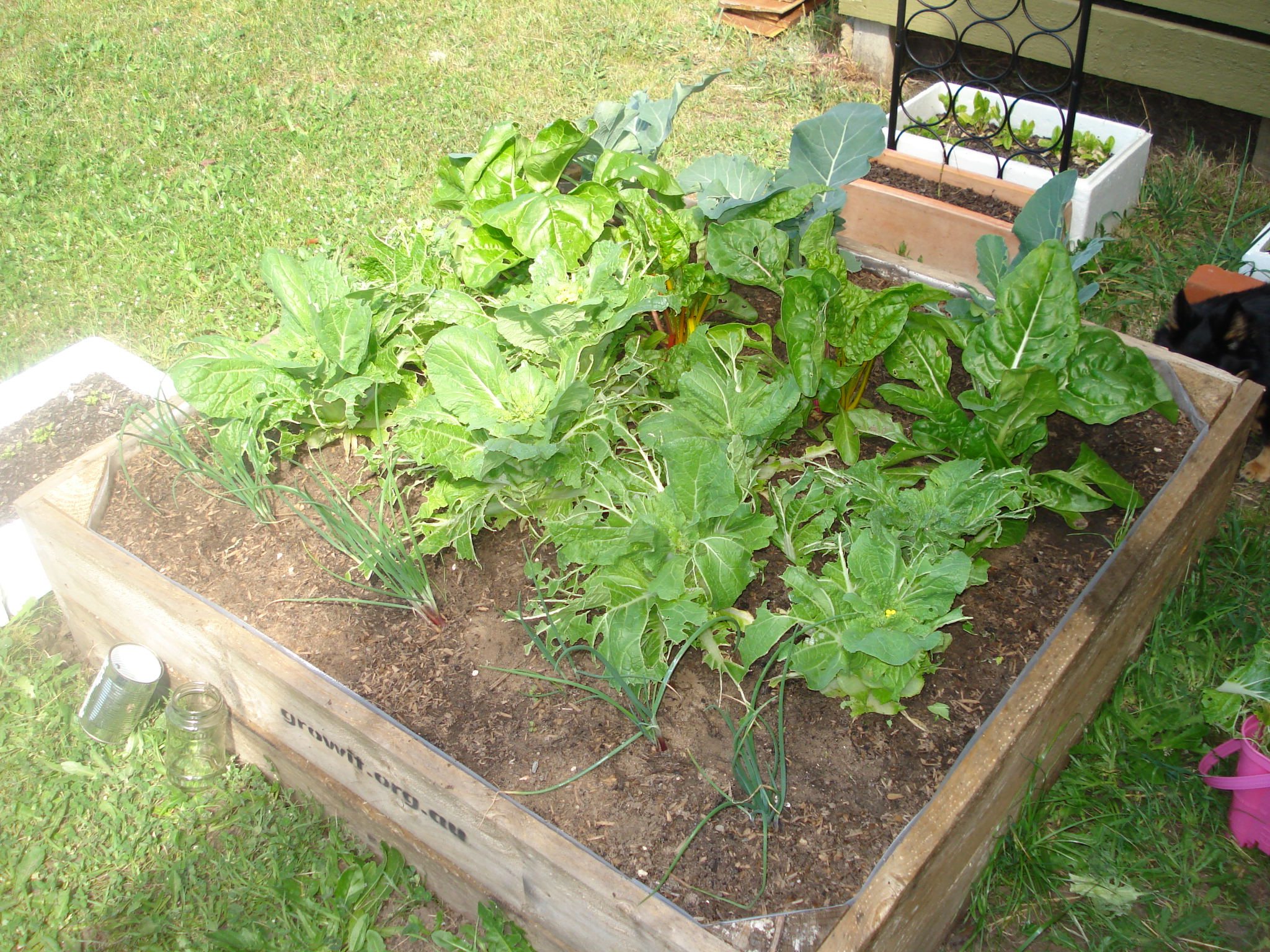 Make an impact anglesea experiments in local living for Garden vegetable patch